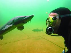 Diver and sturgeon in the lake